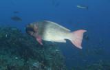 Galapagos 06 63.jpg