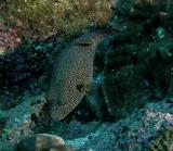 Galapagos 06 82.jpg