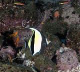 Galapagos 06 62.jpg
