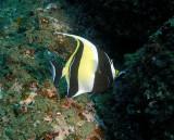 Galapagos 06 80.jpg