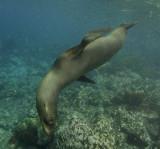 Galapagos 06 127.jpg