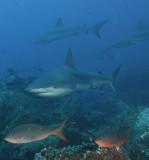 Galapagos 06 10.jpg