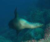 Galapagos 06 99.jpg