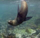 Galapagos 06 121.jpg