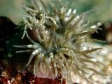 Galapagos 06 12.jpg