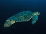 Galapagos 06 114.jpg