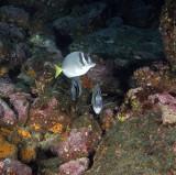 Galapagos 06 25.jpg