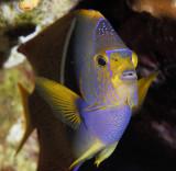 Galapagos 06 52.jpg