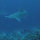 Galapagos 06 16.jpg