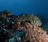 Galapagos 06 69.jpg
