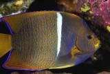 Galapagos 06 53.jpg