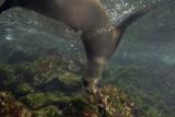Galapagos 06 128.jpg