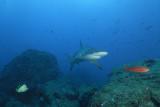 Galapagos 06 34.jpg
