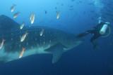 Galapagos 06 21.jpg