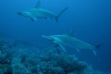 Galapagos 06 20.jpg