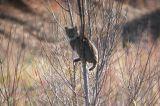 Arkansas Mammals