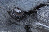 Look at you at my eye - Regardez vous dans mon oeil (detail)