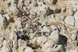 Accroché à la falaise - Perched at the cliff