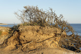 2007 - Erosion