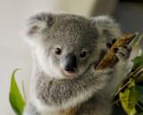 australian_animals