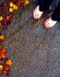 November Rain SP