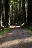 Chris  Sue among the redwoods.jpg