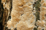 Unidentified Fungus