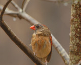 Rainbirds......