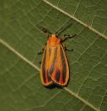 Scarlet-winged Lichen Moth (8089)