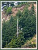 August 18 - Redwoods