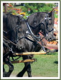 August 26 - Horse Power
