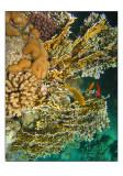 snorkeling in the Red sea aquarium