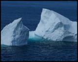 IcebergBirdsDetail43280.jpg