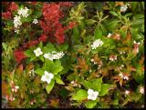 Vegetation3620.jpg