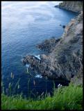 SeagullsMiddleCove3937.jpg