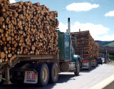 WoodTrucks5104.jpg