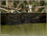 Spider Web October 20 *