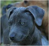 Puppy October 27 *