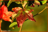 Autumn Colors November 4 *