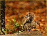 Squirreling Squirrel November 7 *