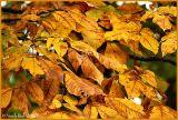 Fall Colors November 8 *