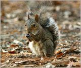 Squirrel November 9 *