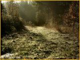 Early Morning Light November 13 *