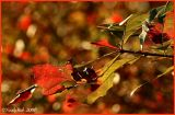 Colors November 20 *