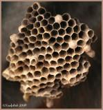 Wasp Nest November 24 *
