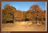 Fall Colors November 26 *