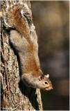 Bushy Tail December 24 *