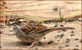 Sparrow December 29 *