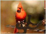 Cardinal February 4 *
