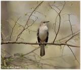 Mocking Bird March 13 *